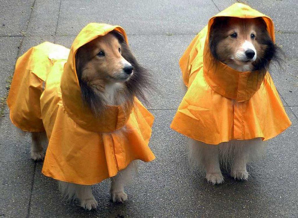 Испанская компания запустила в продажу противоэнцефалитные костюмы для собак