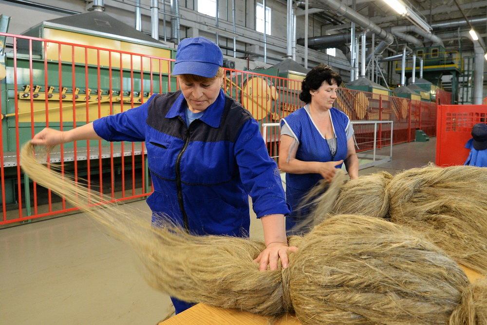 Правительство планирует поддержать производство льна