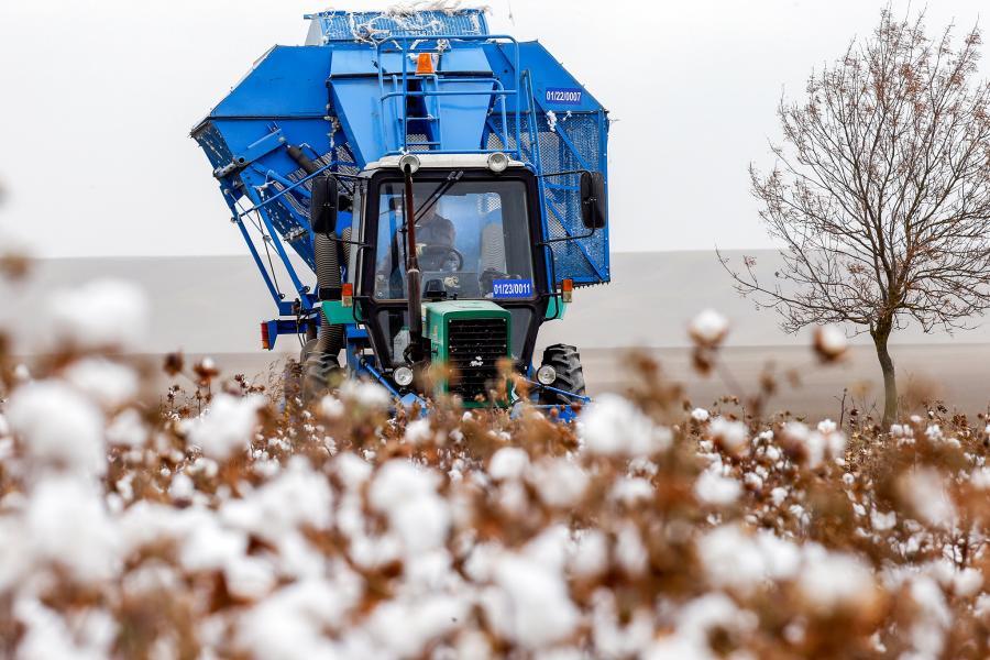 В Ставрополе готовятся к сбору урожая хлопка