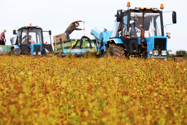 Экологические проблемы вынудят производителей вернуться к выращиванию льна и конопли