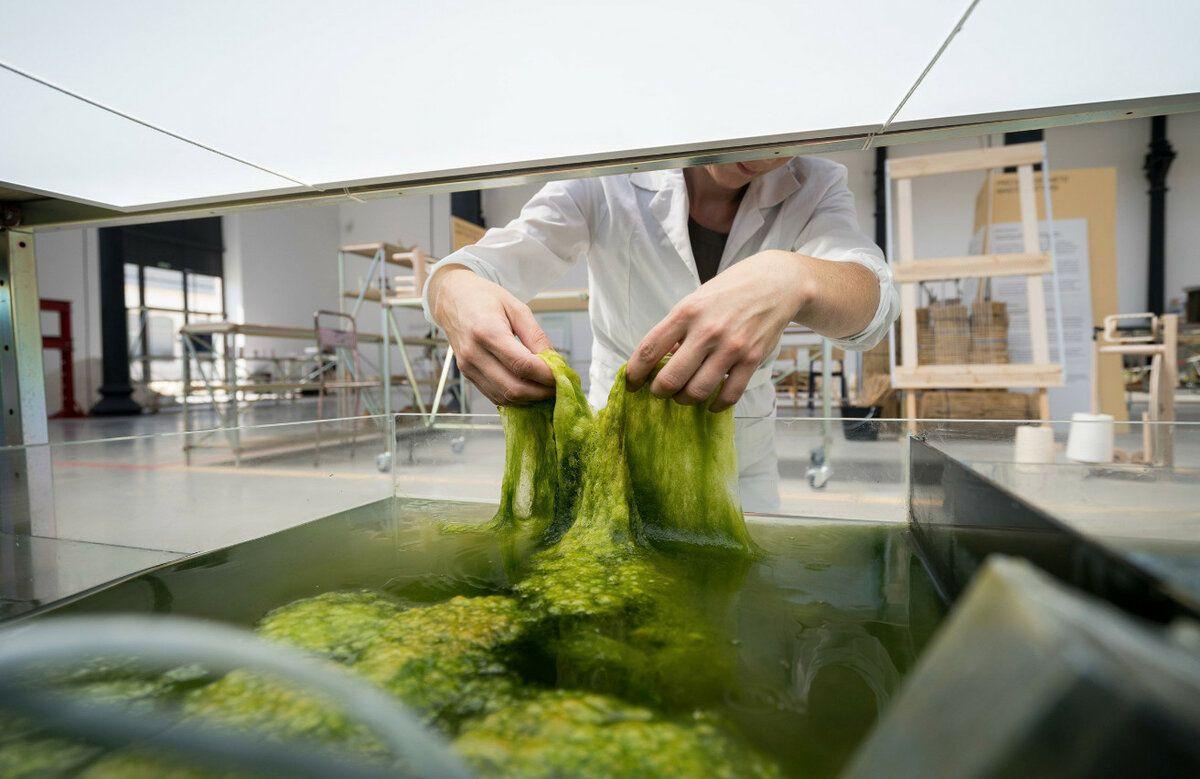 В Великобритании начнут выпускать одежду из морских водорослей