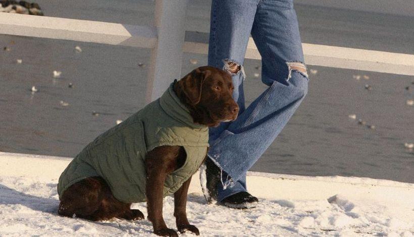 Компания Zara представила свою первую коллекцию одежды для собак