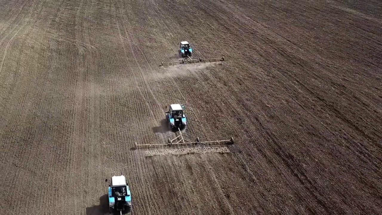 Более 3 тыс. гектаров засеют льном в Алтайском крае