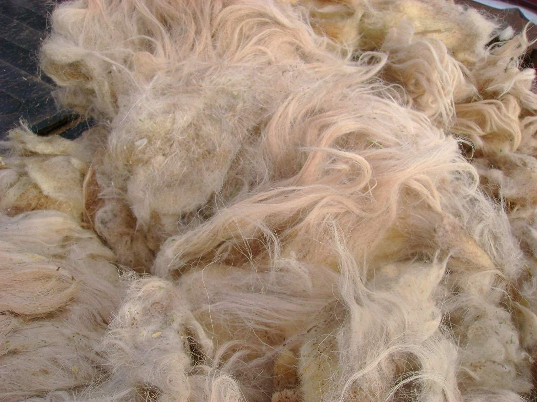 В Саратовской области пресекли ввоз овечьей шерсти без соответствующих документов