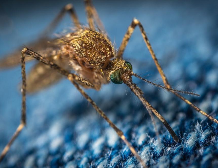 Американские ученые разработали одежду, защищающую от укусов насекомых